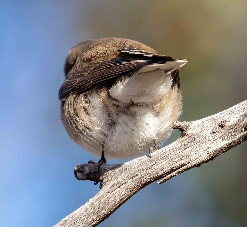 A small bird perched on a tree branch  Description automatically generated