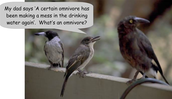 A               small bird sitting on a ledge               Description automatically generated